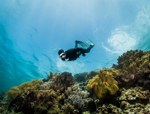 extinction of reefs is coming closer