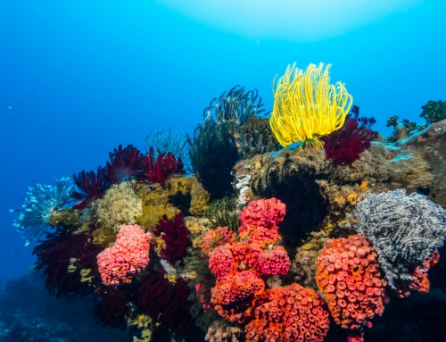Time is running out for the oceans